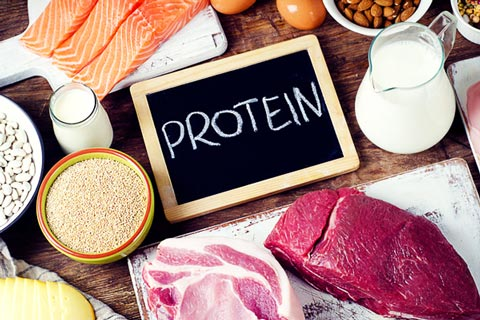 protein diet for slimming