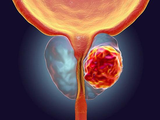 خواص دارویی قارچ طبق تحقیقات گستردهای در سالهای اخیر مشخص شده است