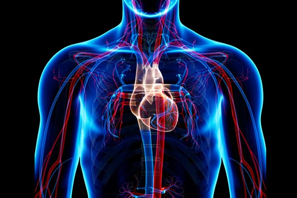 The-circulatory-system