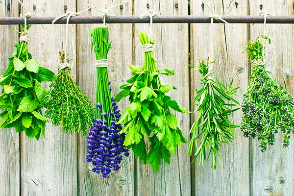 herbs-and-spices-with-medicinal-properties