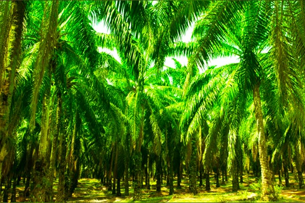 Is-palm-good-or-bad