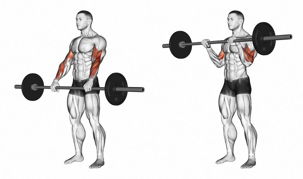افزایش حجم پشت بازو در خانه