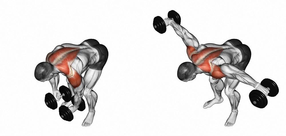 اهمیت عضلات پشت بازو در بدنسازی