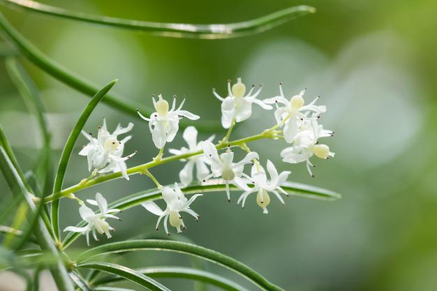 دمنوش گیاهی تقویت قوای جسمی